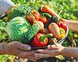 Dieta při dně, cukrovce a vysokém cholesterolu