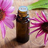 Echinacea - kapky, sirup či čaj. Přírodní lék na posílení imunity
