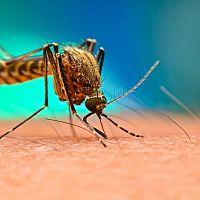 Co proti komárům venku? Nejúčinnější jsou repelenty proti komárům