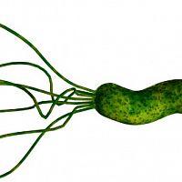 Helicobacter pylori – příznaky. Udělejte si test, léčba je komplikovaná